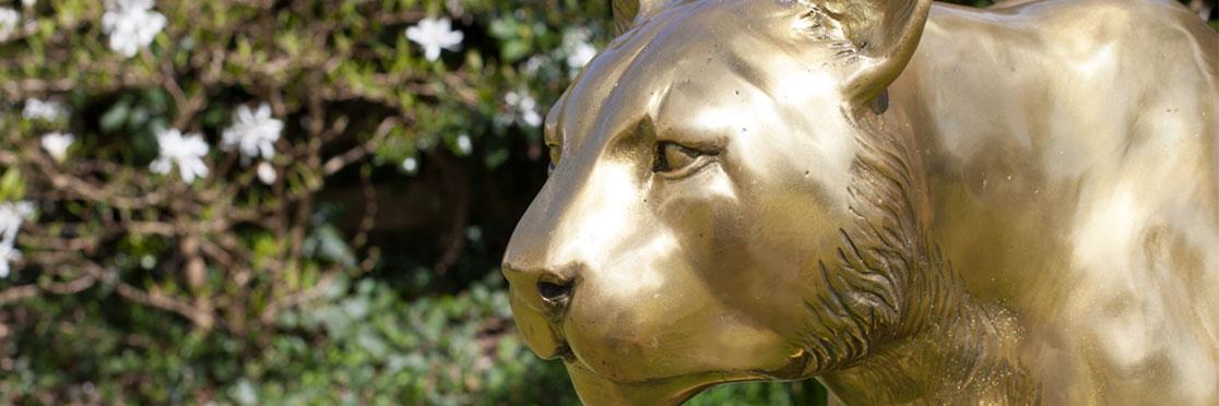 bronze-cougar-banner