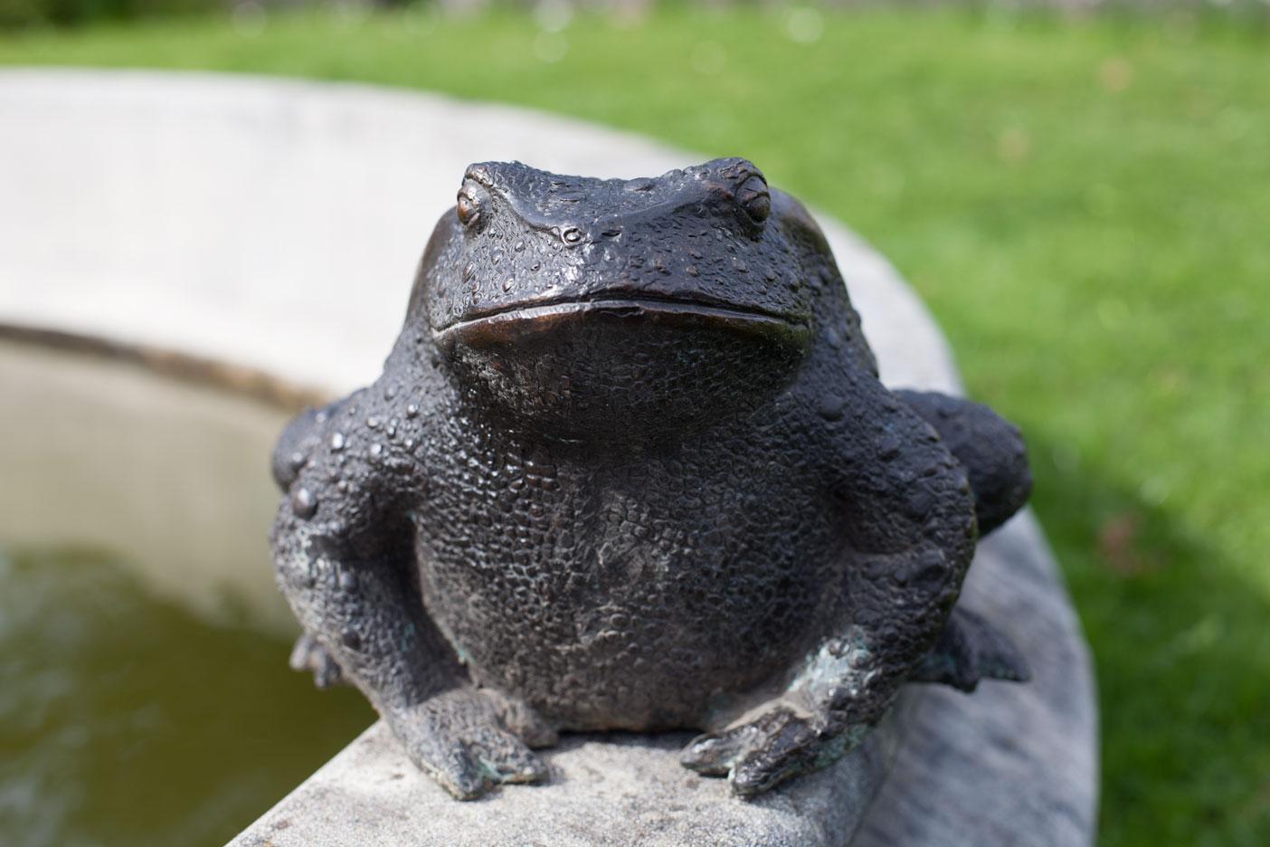 bronze toad