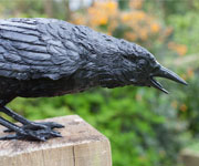 bronze crow pecking beak open
